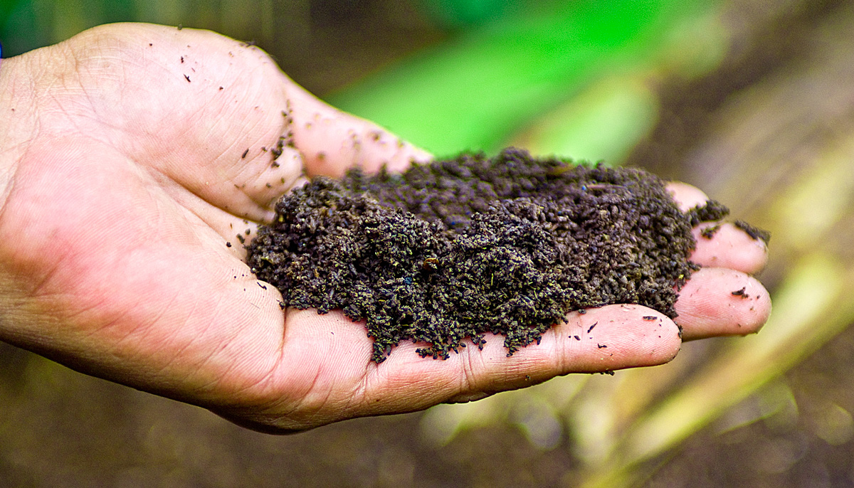 Certified-Organic-Fertilizer-Vermicast